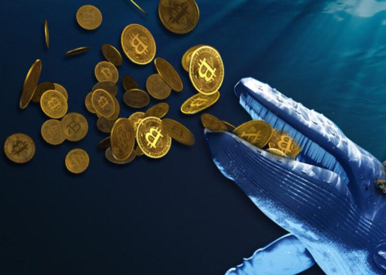 Los millonarios de Bitcoin compran 50.000 BTC en los últimos 4 días